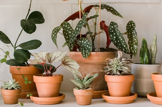 Houseplants Quality
